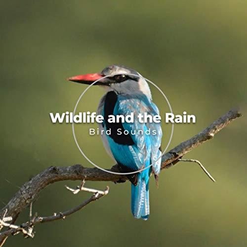 Sprinklers and Birds