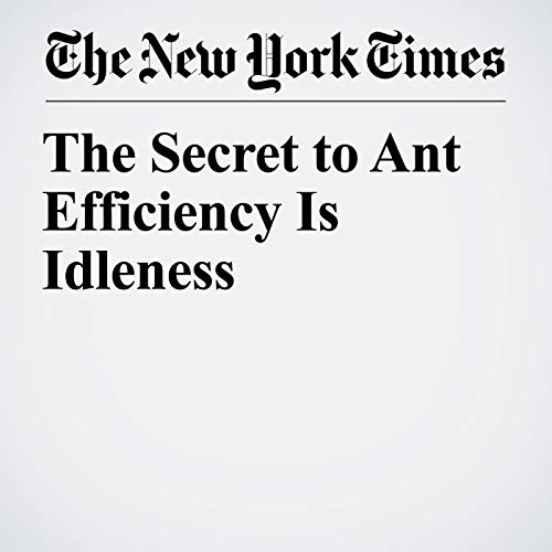 The Secret to Ant Efficiency Is Idleness copertina