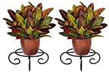 Rise Corp Metal Flower Pot Stand - 4 Leg, Plant Shelf/Display Floor Stand for Living Room/Garden/Balcony Decor (Black, Size: 20 X 20 X 10 cm) Pack of 2