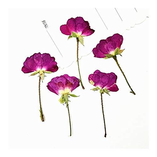 Flor Artificial 20-24pcs Natural Prensado Rosas con Tallo de la Flor Rosa Eterna Secos Decoración (Color : 20pcs 1 2cm Head)
