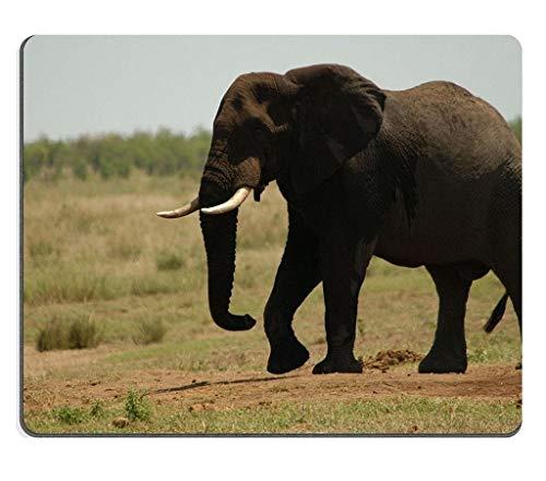 Naturkautschuk Gaming Mousepad Afrikanischer Elefant-Krüger-Nationalpark Südafrika (Mauspad/Gaming-Mauspad)