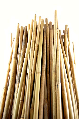 1000 bamboo stakes - 2