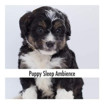 Puppy Sleep Ambience