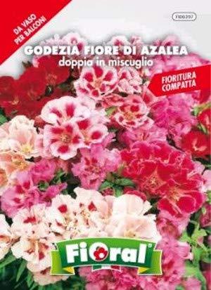Sementi da fiore di qualità in bustina per uso amatoriale (GODEZIA FIORE DI AZALEA DOPPIA IN MISCUGLIO)