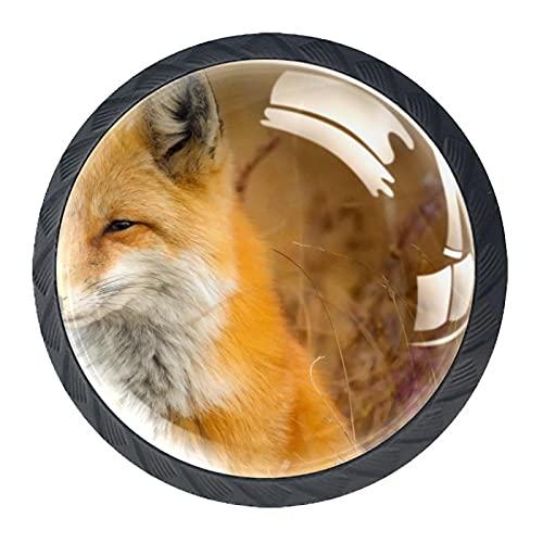 Fox Closeup Nature, pomos de resina para cajones de armario, perillas decorativas para armario, juego de cuatro piezas
