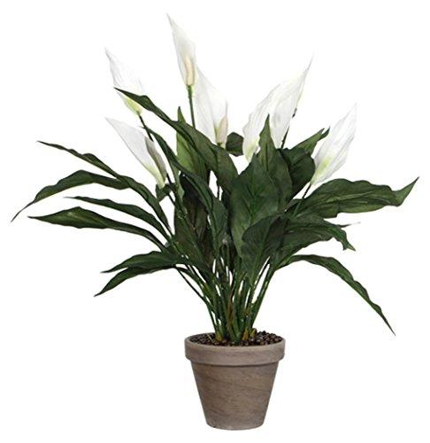 MICA Decorations 947789 Fleurs, Anthurium Tigre et Spat hiphylum Blanc
