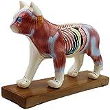 Modelo de anatomía, Modelo de acupuntura animal - Modelo de anatomía animal - Modelo anatómico de perro / gato - CAT (36 puntos de acupuntura) y perro (72 puntos de acupuntura) Anatomía científica Ana