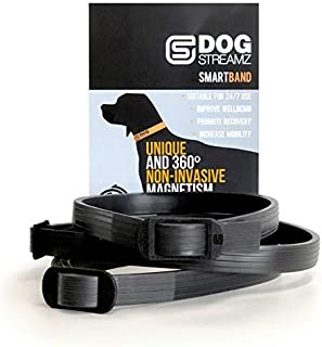magnetic dog collar