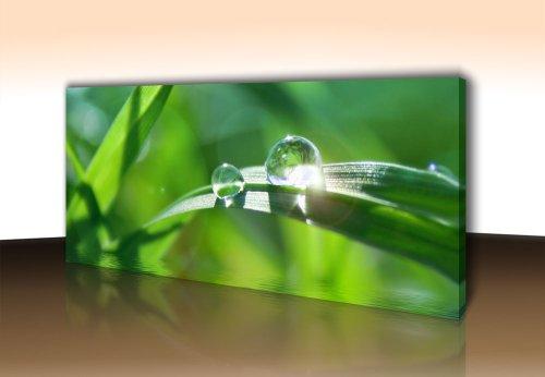 wandmotiv24 Leinwandbild Panorama Nr. 32 Wassertropfen 100x40cm Format: quer, Keilrahmenbild, Bild auf Leinwand, Kunstdruck Gras Halm Wasser