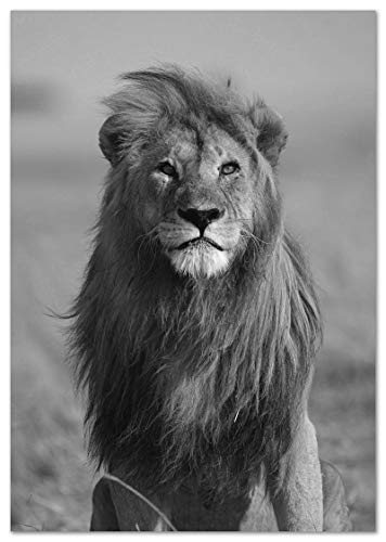 Panorama Lienzo León Africano 50x70cm - Impreso en Lienzo Bastidor - Poster de Animales - Cuadros de Animales Decorativos - Cuadros de Salón Modernos