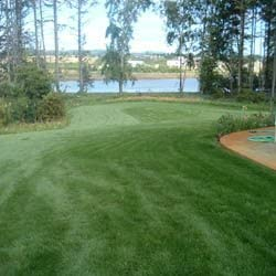 Outsidepride Combat New Orleans Mall Extreme Turf Type Tran Minneapolis Mall for Grass Fescue Seed