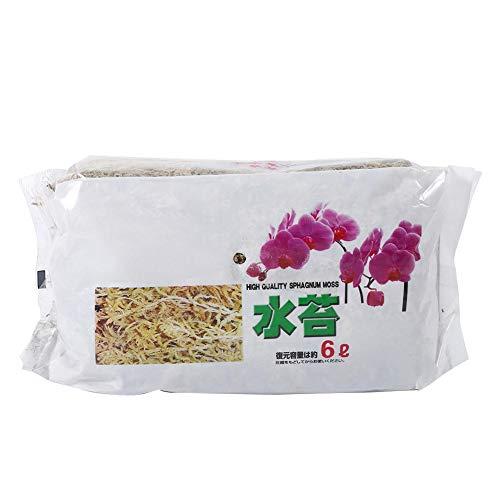 Lichen Sec 20 x 11 cm / 7,9 x 4,3 Pouces Mousse de sphaigne Phalaenopsis Mousse de sphaigne Nutrition hydratante pour Plante Phalaenopsis orchidée Fleurs Jardinage