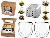 TEEBLUMEN-GESCHENKSET / 2x 310ml DUOS Jumbo Doppelwandgläser + 6er Box Teeblumen weißer Tee in...