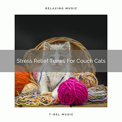 Stress Relief Tunes For Couch Cats