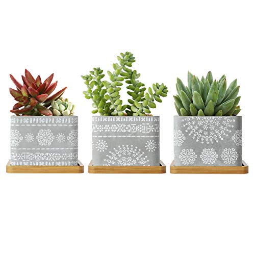 T4U 3.5 Inch Cement Succulent Pot with Bamboo Saucer Set of 3, Concrete Square Planter Cactus Plant Herb Container for Gardening Home and Office Decoration Birthday Wedding Christmas Gift