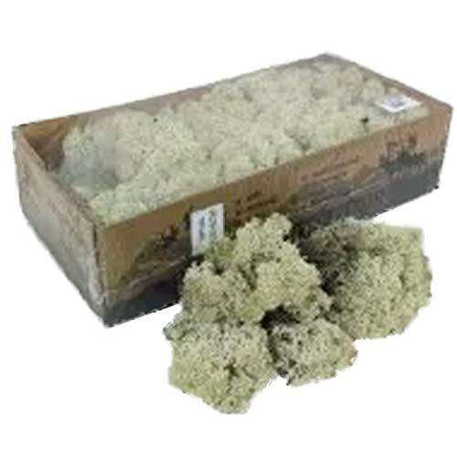 Reindeer Moss Lichen - Natural Preserved Dried - 500 Grams - Natural