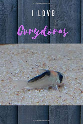 I Love Corydoras ( Version 2 ) : Notebook : For Corydoras 's Lovers: Beautiful Notebook 's cover with Corydoras picture : By Kasidit Wannurak