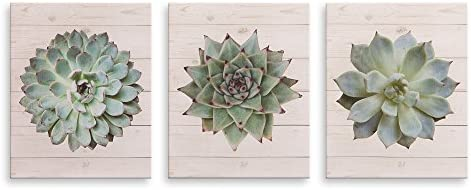 Patton Wall D cor Succulents on Wood Painting Set of 3 Canvas Wall Art Set 8 x 10 product image