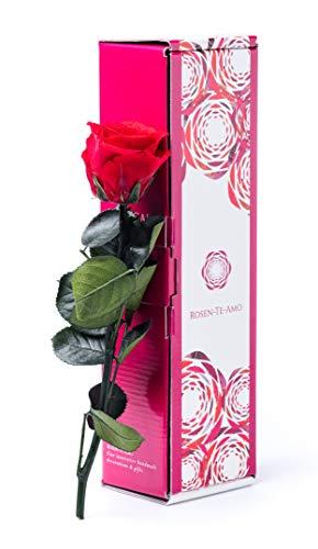 Rosen-Te-Amo, rosa eterna rossa con stelo e biglietto auguri scaricabile in nuova confezione regalo dal design raffinato. Rose stabilizzate: idee regalo san valentino per lei o decorazioni casa