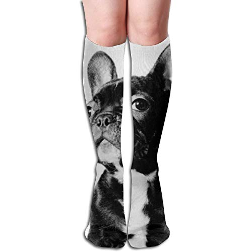 Ccsoixu The Silly Dog 50 Full Comfort Knee High Socks Cotton Long Knee High Socks