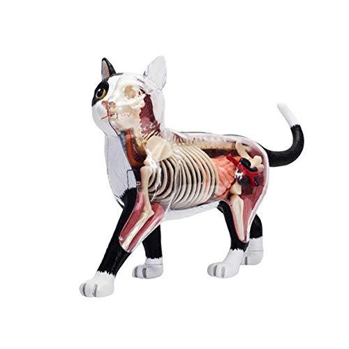 N \ A 4D Cat Anatomy Model - Abnehmbare 28 Teile - Tierorgan-Montagespielzeug Für Den Medizinischen Unterricht - Schwarz-Weiß-Katze
