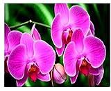 Mariposa Orquídea Ilustración 5D Diy Kits De Pintura De Diamantes Diamante Redondo Decoración De La Pared Del Hogar Regalo Juego De Interior Desafío Duro