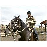 パタゴニア牛の大移動に…川岡大次郎が出会った(#136)