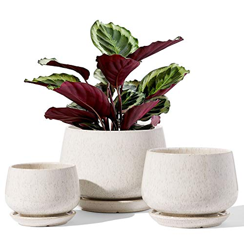 LE TAUCI Plant Pots, 4.1+5.1+6.5 inch, Set of 3, Ceramic Planters with Drainage Hole and Saucer, Indoor Flower Pot with Hole Mesh Pad, Gifts for Mom, Reactive Glaze Beige