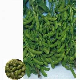 枝豆 種 早生黒頭巾 1L