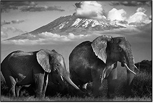 XMYC Impresiones para paredes Negro Blanco Elefante Salvaje Montaña Carteles Paisaje Fotos Salón Decoración Hogar 27.6x35.4in (70x90cm) Sin Marco