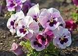Flores Artificiales Cerámica Blanca Falso Maceta con Planta suculenta Pot Set Inicio decoración de jardín Flor del Arte de Bonsai Adornos: 3