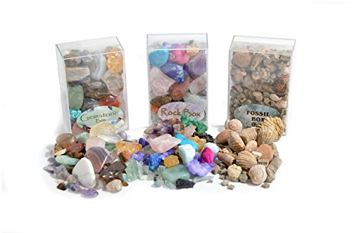 Fossil, Rock & Gemstone Box by Fossil Gift Shop