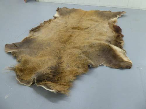 Robert Tartufferie - Alfombra de piel de ciervo rojo para esconder la piel de ciervo de taxidermia de caza coleccionable para decoración del hogar.