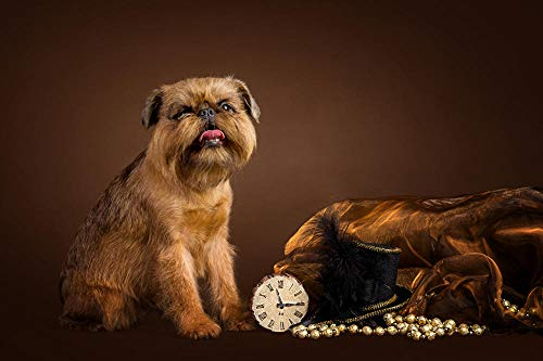 MX-XXUOUO Puzzle de Madera de 1000 Piezas, Perros, Bruselas, Sombrero de grifón, Animales de Colores, Apto para Adultos, niños y Principiantes