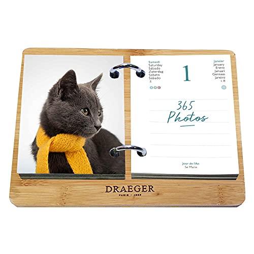 ドレジャー 2022年 365日日めくりカレンダー(BOXセット) CATS(卓上タイプ) 猫 動物 写真入り 輸入雑貨 [FSC認証]