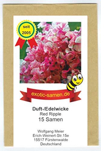 Duftwicke - Edelwicke - Bienenweide – Red Ripple – 180 - bis 200 cm - 15 Samen