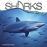 2021 Sharks Wall Calendar
