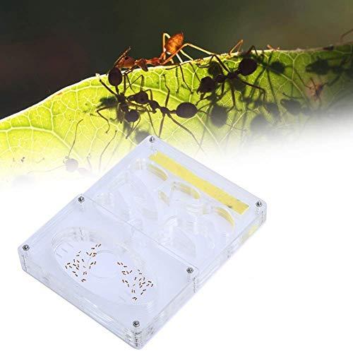 HEEPDD Ameisen Bauernhof, Acryl Transparent Ant Nest Insektennest Fütterungssystem Ant Habitat Pädagogisches und Lernendes Naturwissenschaftliches Kit
