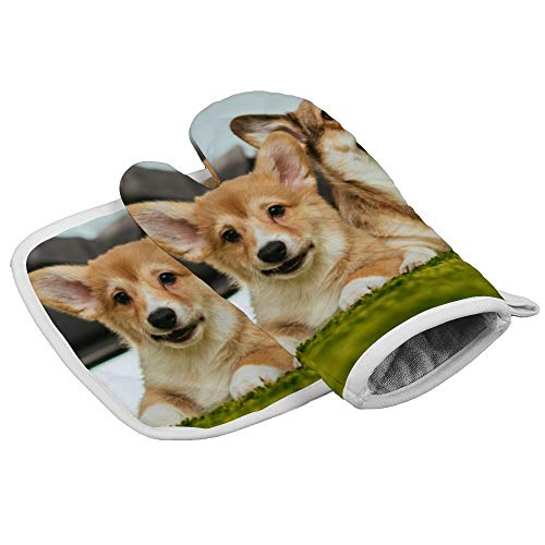 N/A Isolatie handschoenen Twee Welsh Maïs Honden op Het Grassland Professionele hittebestendige Oven Manten, Inclusief geïsoleerde handschoenen en geïsoleerde vierkante pads
