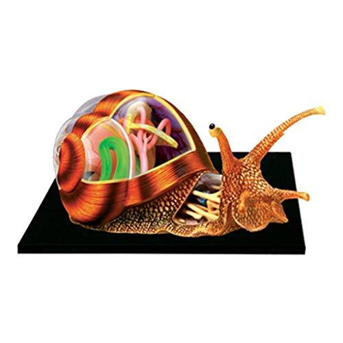 Modelo Educativo 4D Visual Caracoles Modelo anatómico 32 órganos y Partes del Cuerpo Desmontables Modelo anatómico Animal para biología Modelo de enseñanza de Animales, Juguete de ensamblaje de ROM