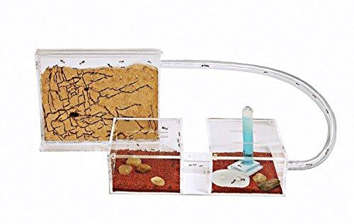 AntHouse - Natürliche Ameisenfarm aus Sand - Mini Set (Sandwich + Futterbox) (Gratis Ameisen)
