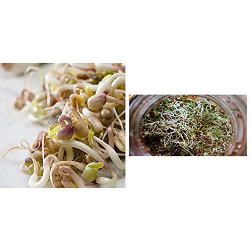 Sprouting Seeds Mung Bean Organic - 40 gm, MNG01 & Premier Seeds Direct Organic Sprouting Seeds - Alfalfa - 40 GM