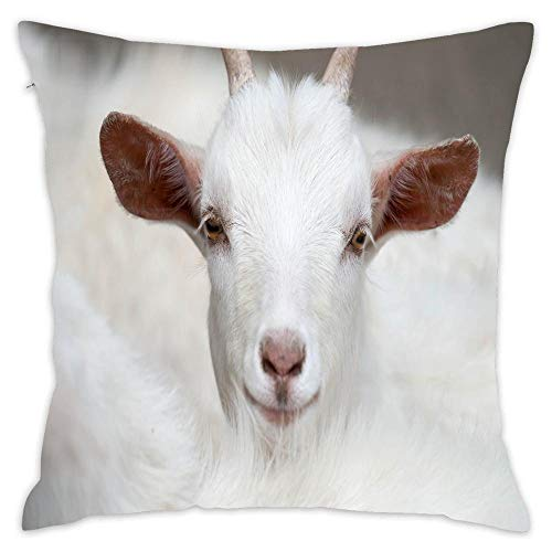 Premium Cotton Decorative Throw Pillow Case Cushion Cover Animal Pillow Case 18' X18 Throw Pillow Cover (White Goat Front View)
