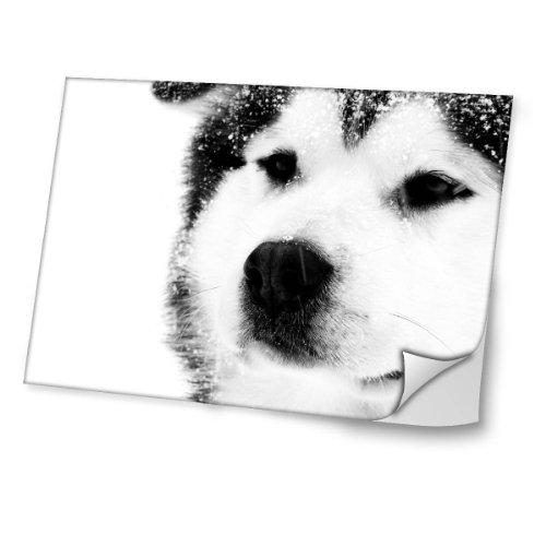 Virano Hunde 10006, Husky, Skin-Aufkleber Folie Sticker Laptop Vinyl Designfolie Decal mit Ledernachbildung Laminat und Farbig Design für Laptop 15.6