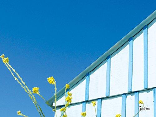 Sommerstimmung mit Ginster - Künstlermotiv, XXL Wandbild, Größe: 80 x 60 cm Quer-Format, Digital-Druck auf Art Canvas Leinwand, Keilrahmen 2 cm. Frankreich Haus Hütte weiß blau gelb Bild groß Kunst
