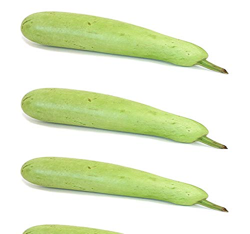 Big Pack - (50) Calabash Long Squash/Melon Seeds, Opo Bottle Gourd - Non-GMO Seeds by MySeeds.Co (Big Pack - Calabash)
