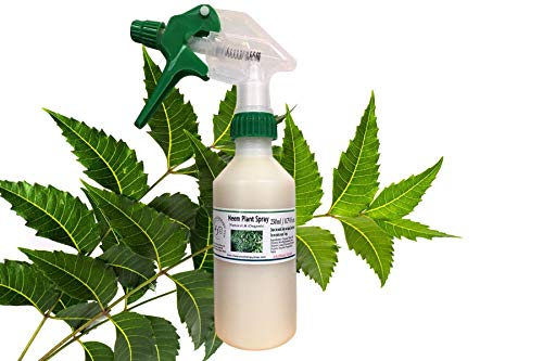 The Aromatherapy Shop Neem Oil Plant Spray 250ml/ 8.79 fl ozs. Organic and Natural