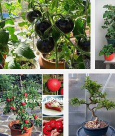 Graines 100PCS / rouge Sac banane tomate, original Paquet Novel plantes Semences Potagères bricolage jardin Easy Grow