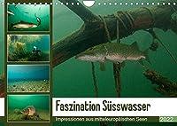Faszination Suesswasser (Wandkalender 2022 DIN A4 quer): Tauchen im See (Monatskalender, 14 Seiten )