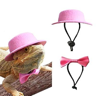 Amazoncom  Sawyd Bearded Dragon Hat and Bowtie